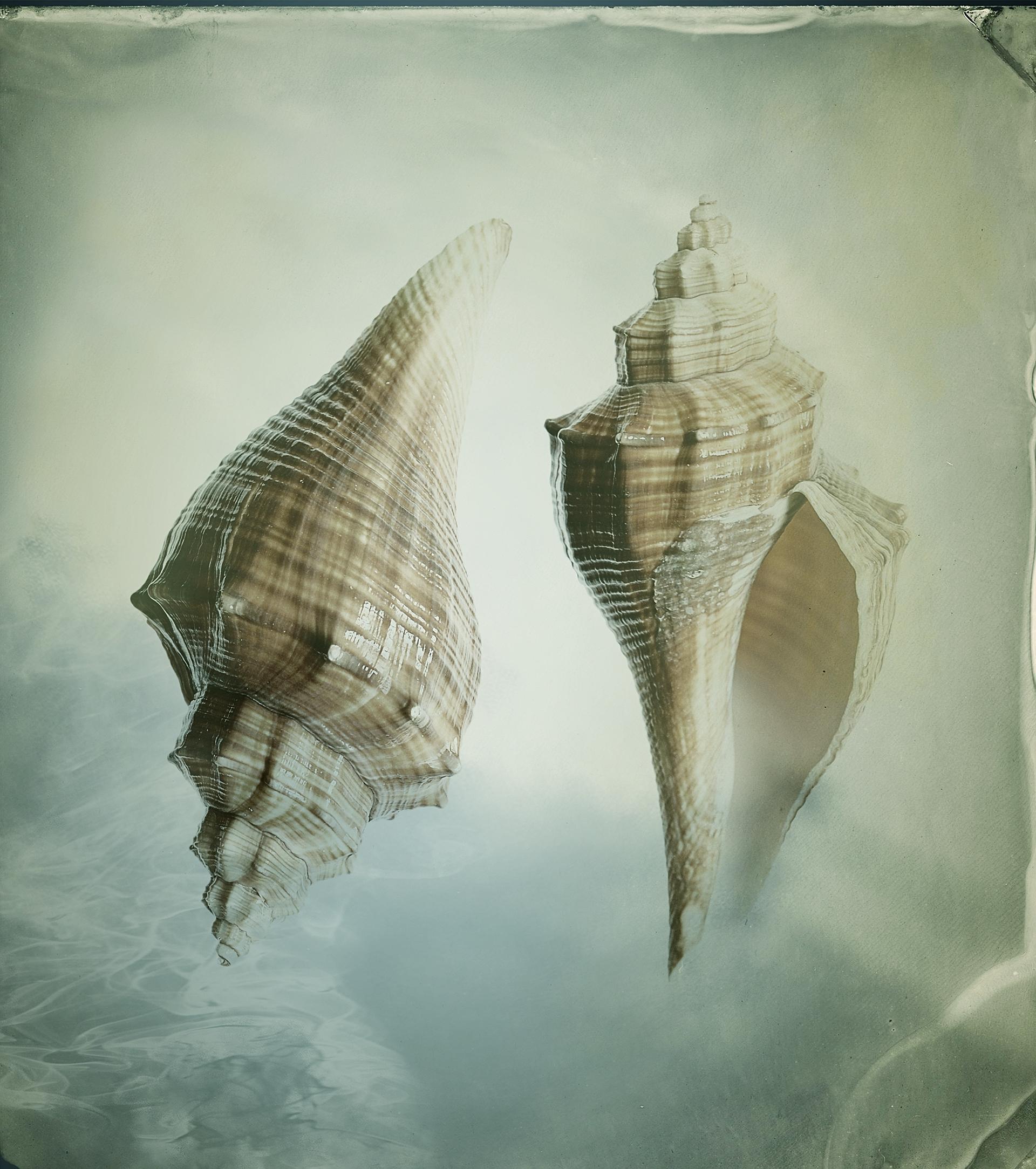 Shells / фотограф Bettina Güber