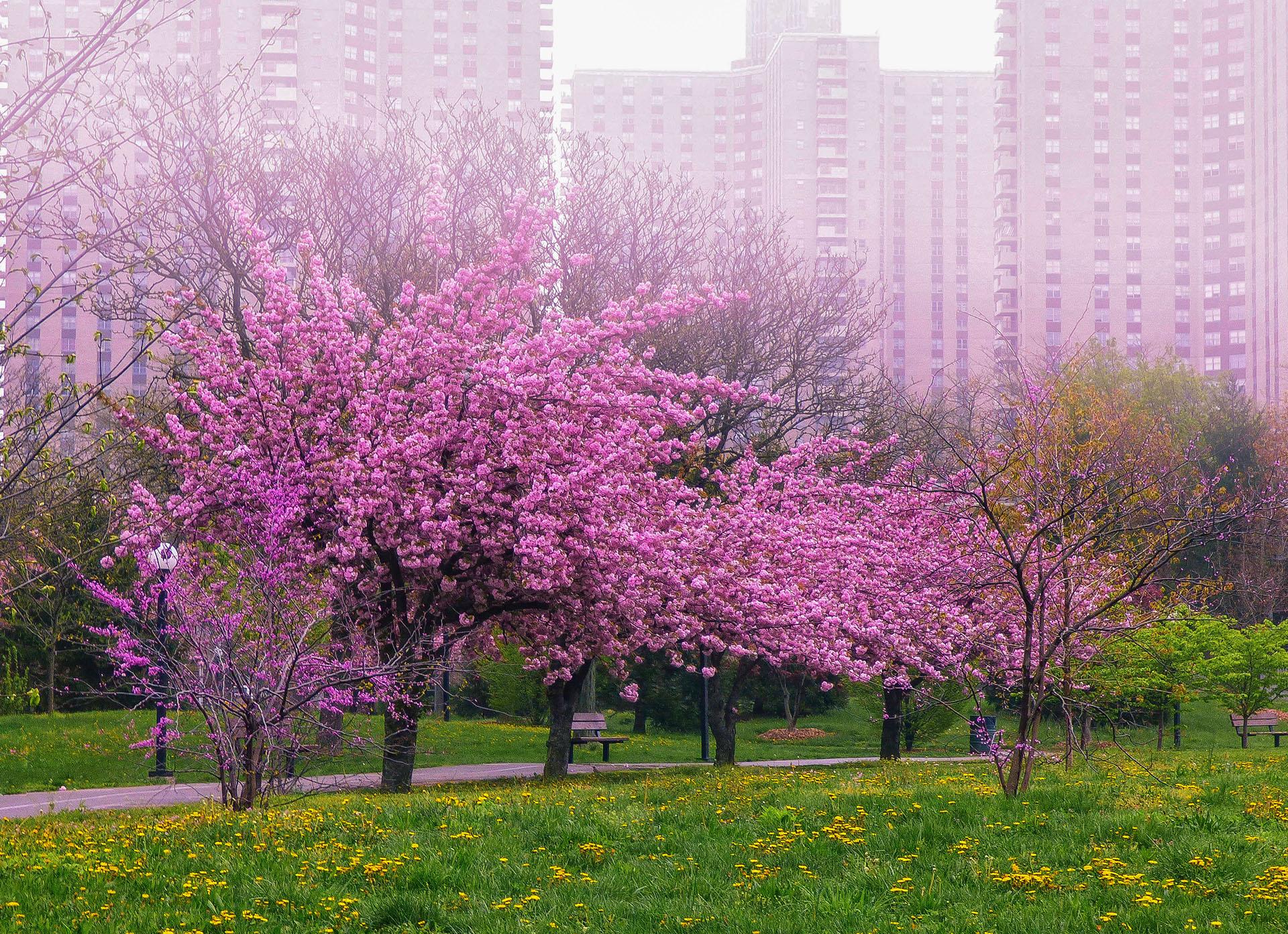 FAIRYTALE OF NY SPRING / фото Maks Erlikh