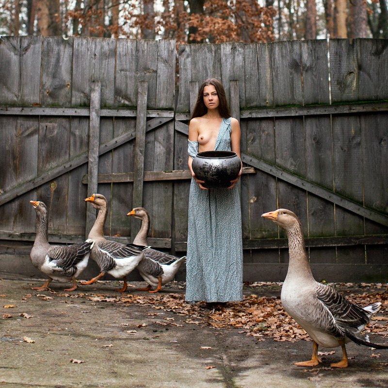 Кормление гусей / фото Oxana