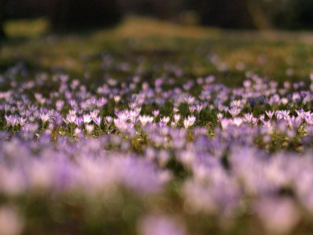 Весенние цветы / фотограф Miriola Dzik