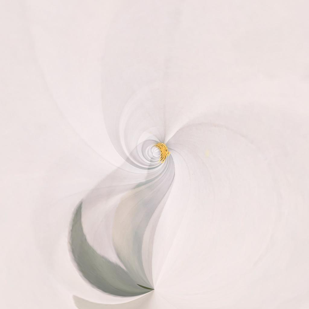 Floral Fantasia / фото Usha Peddamatham