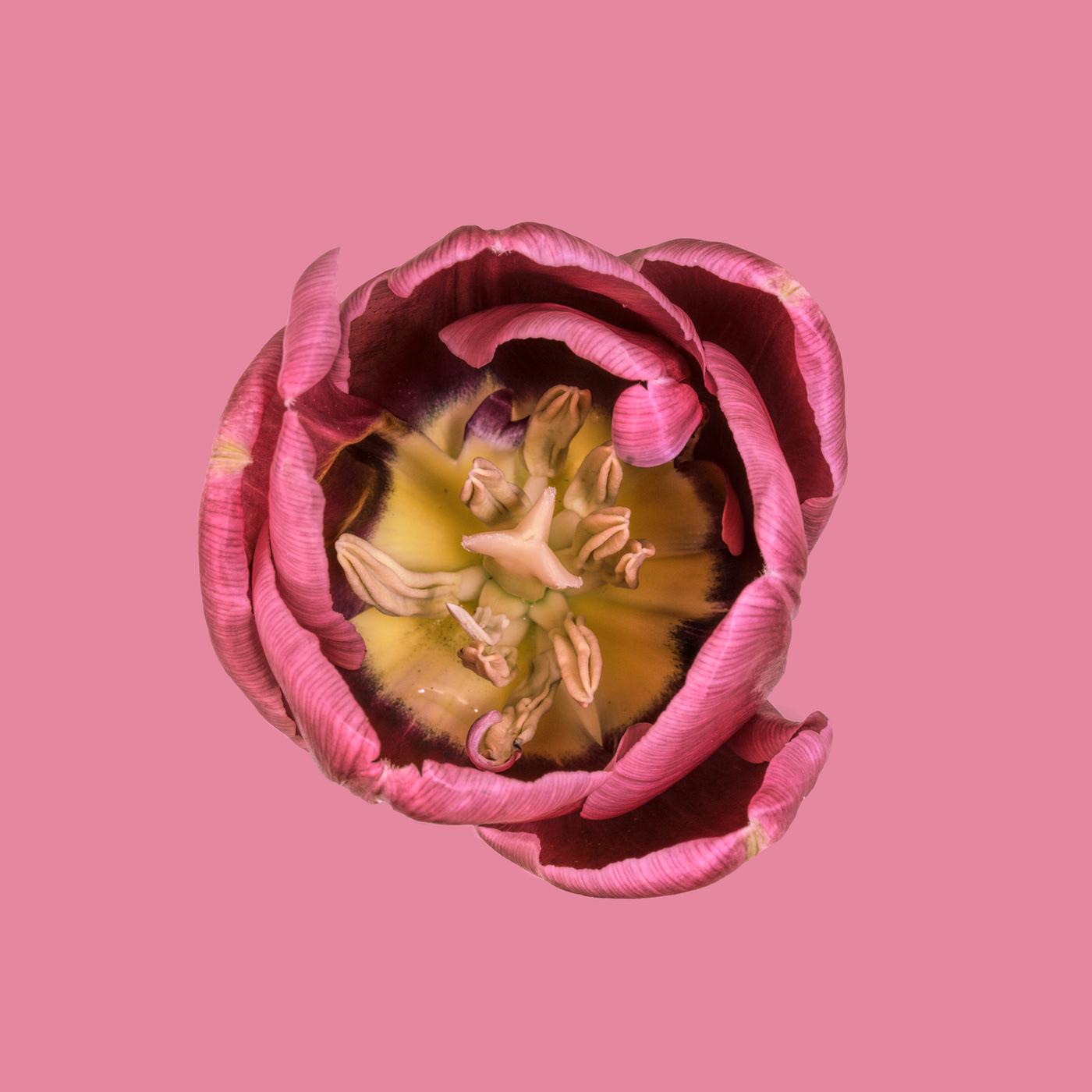 Think Pink / фото Bettina Güber