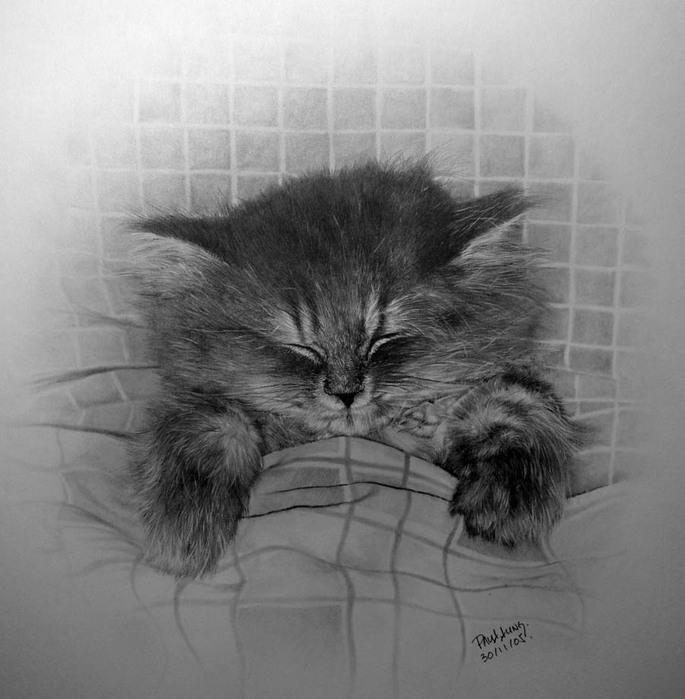 Рисованные котики Paul Lung