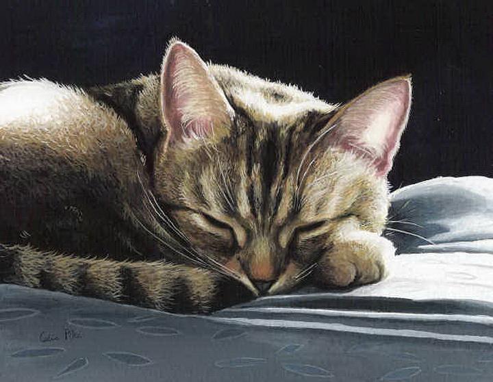 Коты Celia Pike