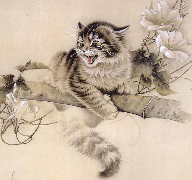 Китайские котики