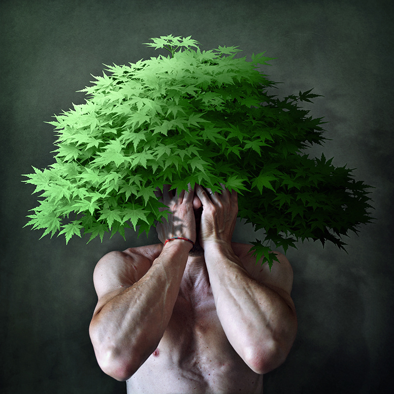 Botanicula / фото Francesco Sambo