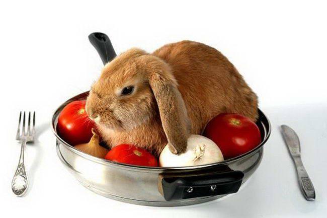 Почему кролик отказывается от еды?