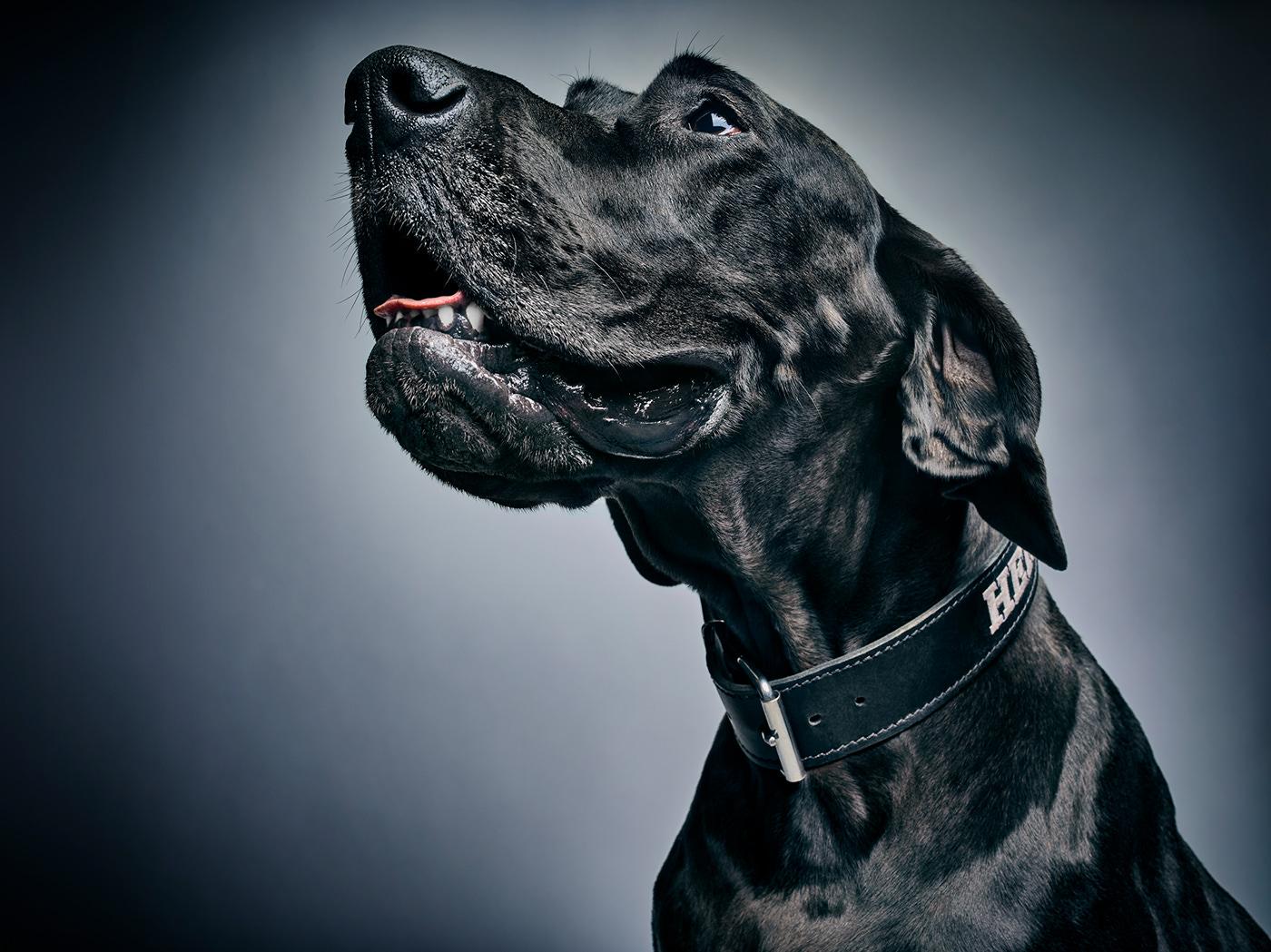 Гламурные собаки Albert Heijn / фото Jaap Vliegenthart