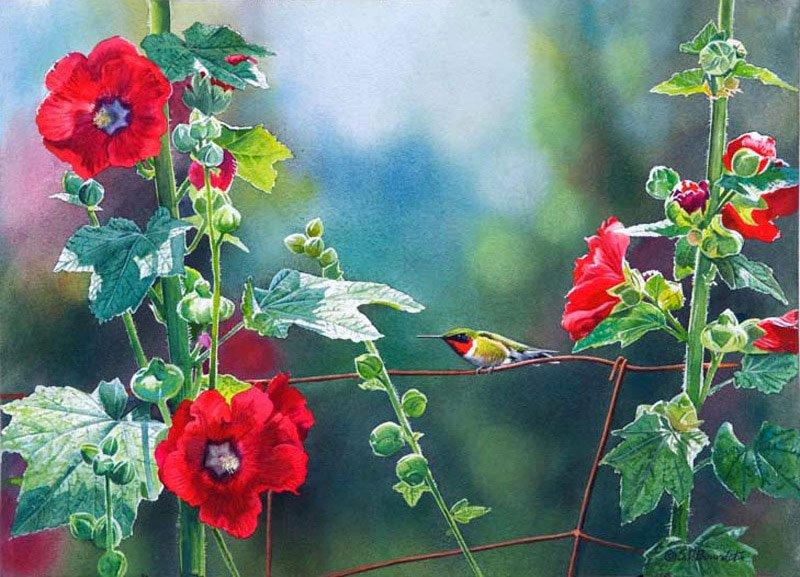 Птицы Susan Bourdet