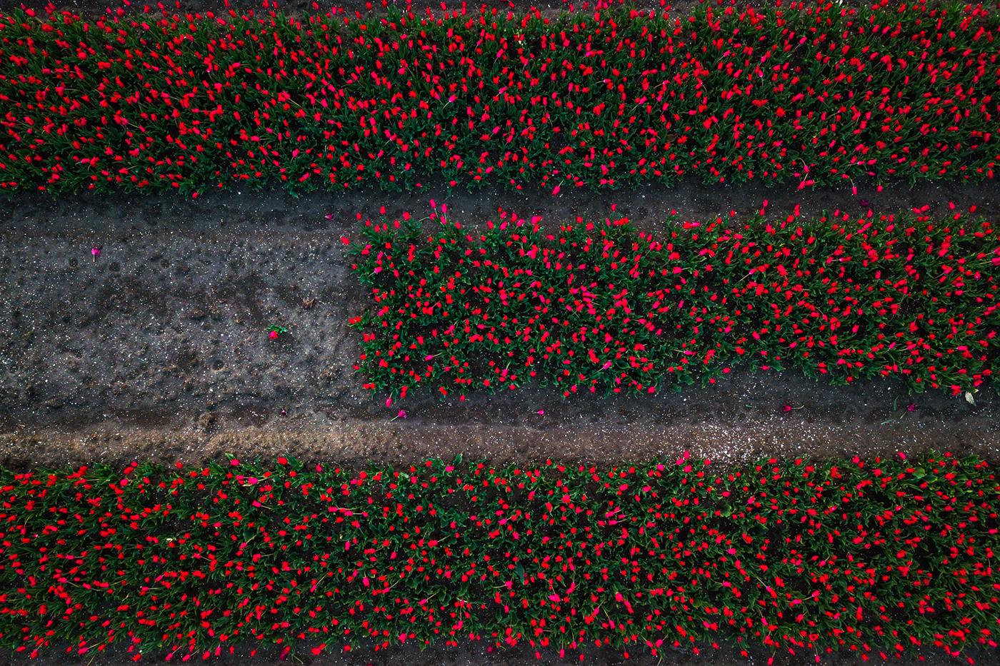 Flower Carpets by Albert Dros