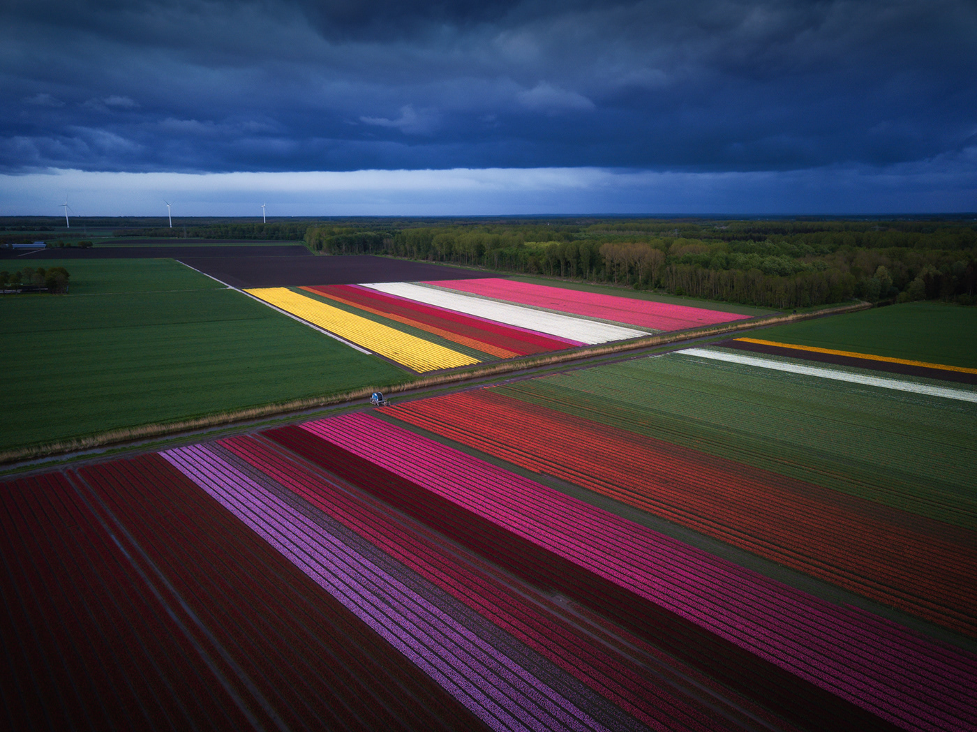 Flower Carpets by Albert Dros
