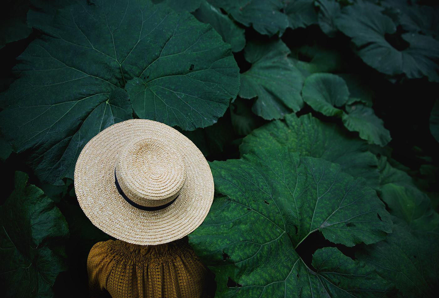 harvest / фото Ekaterina Belinskaya