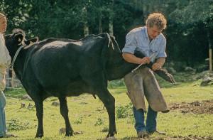 Мастер-педикюра-для-коров