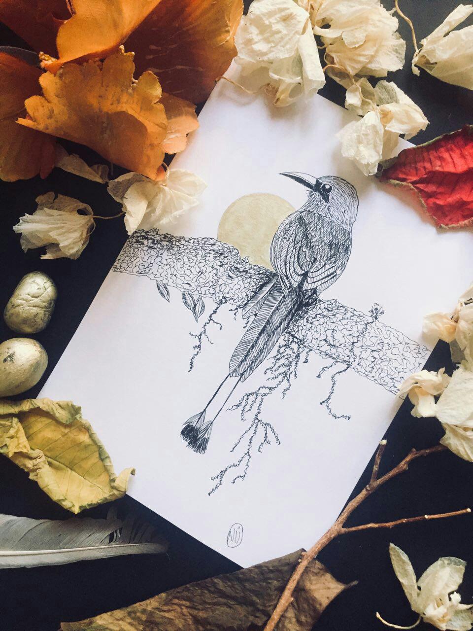 2018 Birds from Colombia / рисунки чернилами Nur Üveyik