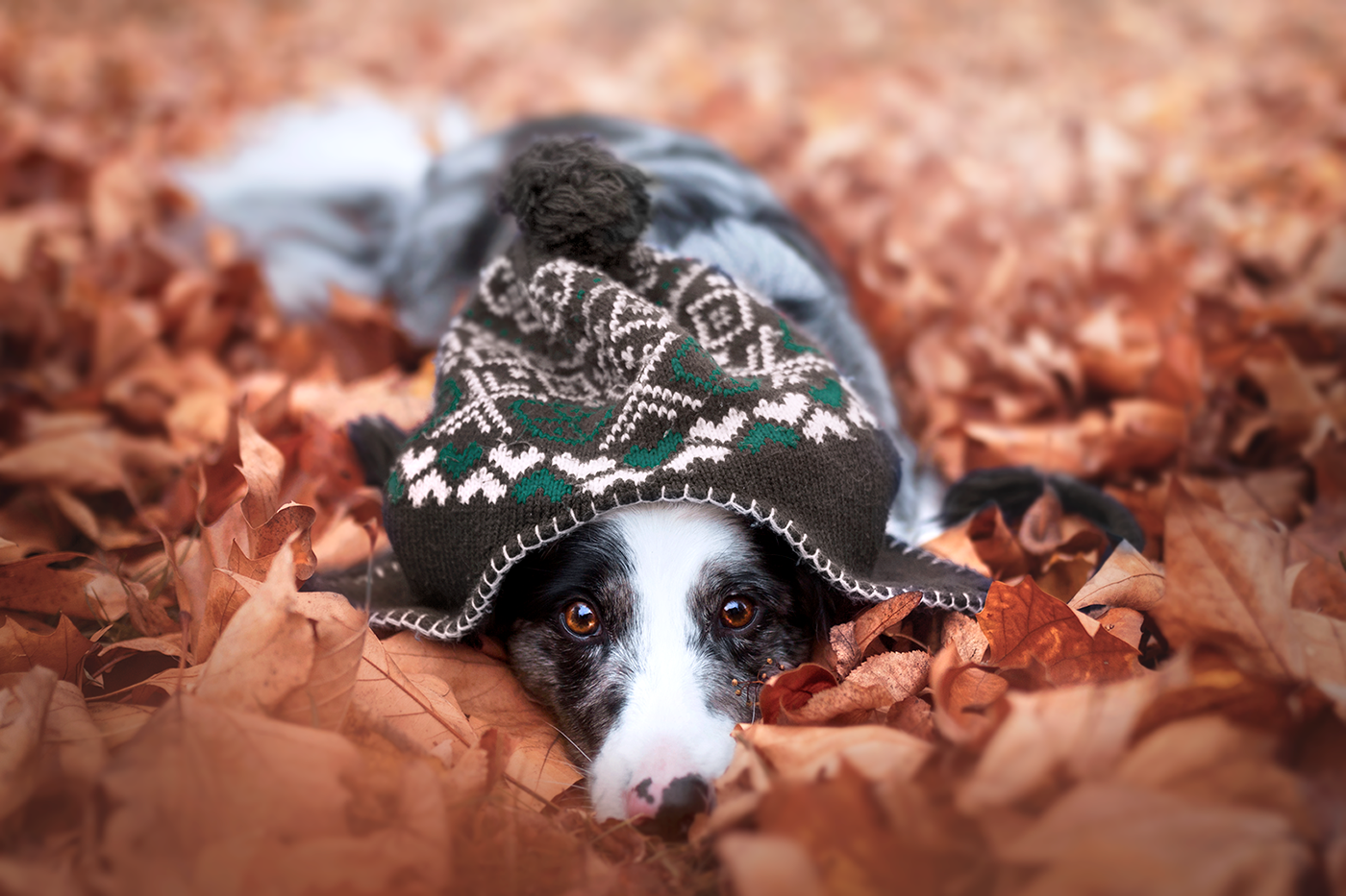 Собаки осенью / фотограф Martyna Ożóg