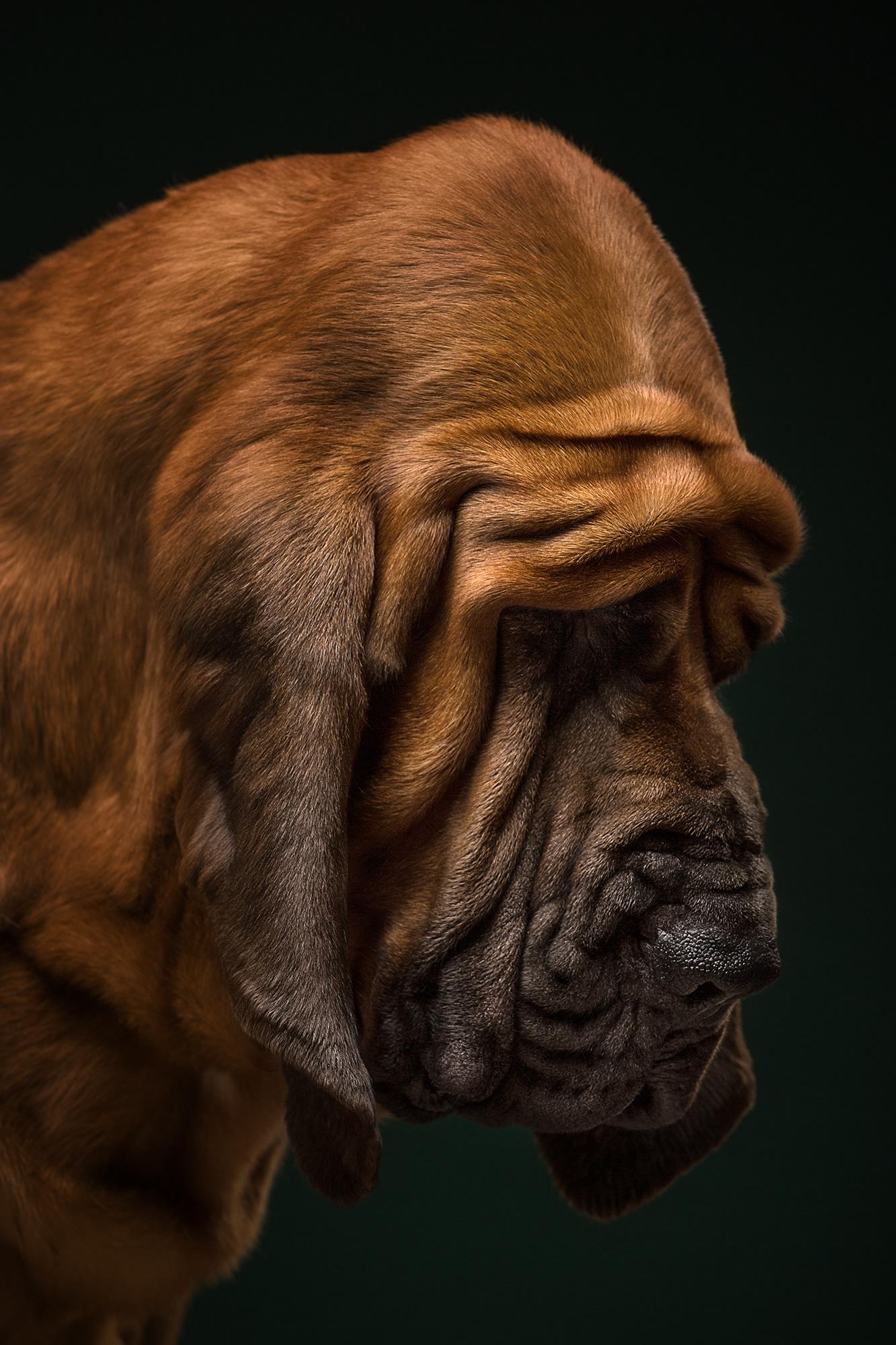 The Dog Show / фотографы Alexander Khokhlov and Veronika Ershova