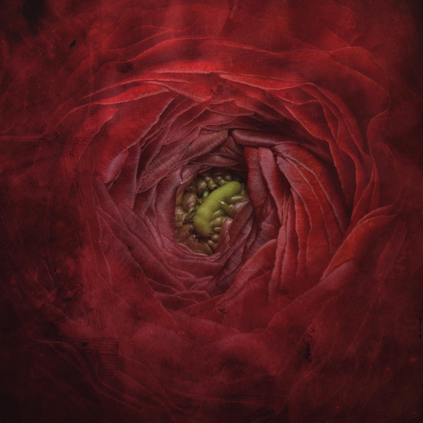 Bloomy Dreams / фото Bettina Güber