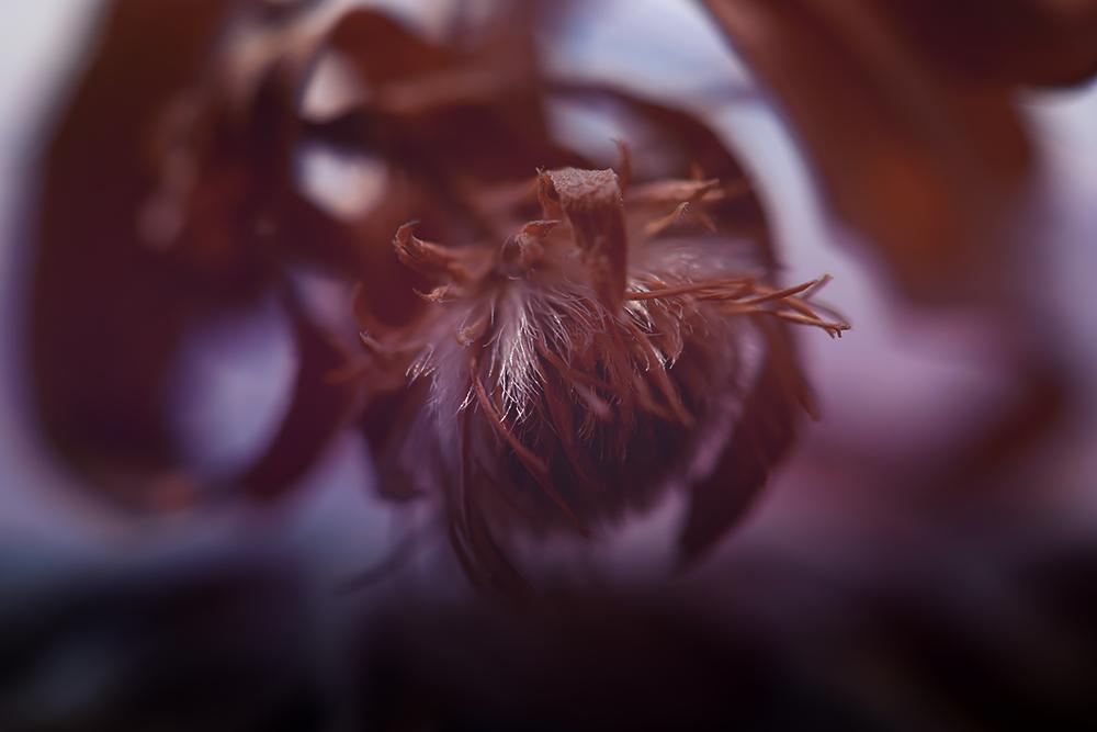 9 - цветы / фотограф Франциска Гомиш-де-Пино
