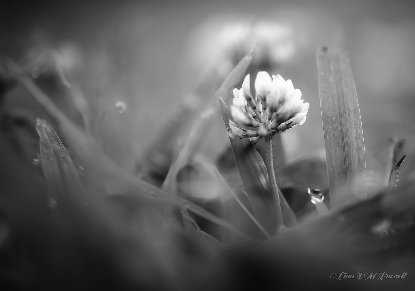 Цветочное Макро / фотограф Lina DM Purcell