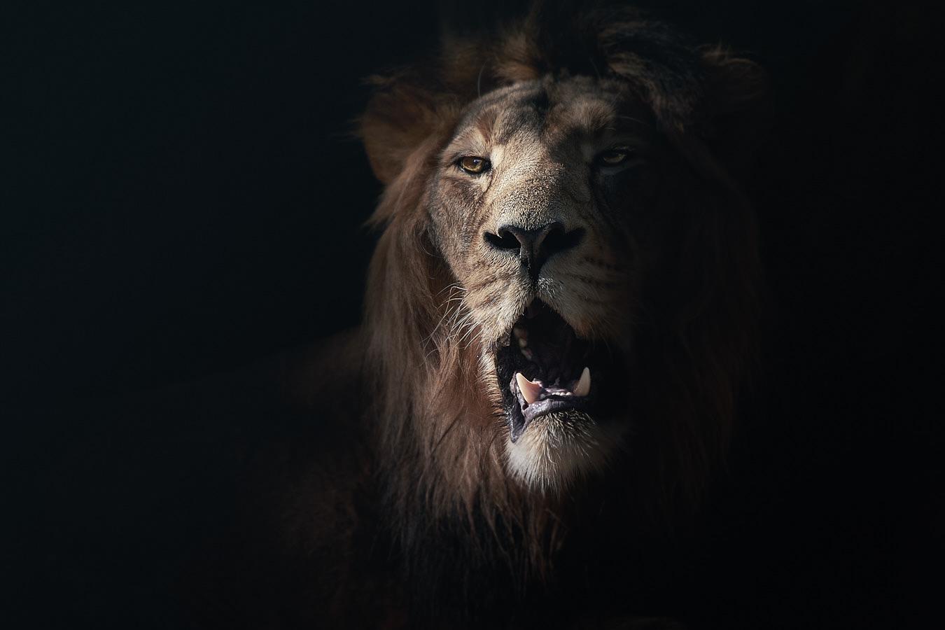 Mammals_ZOO / фотограф David Drbal