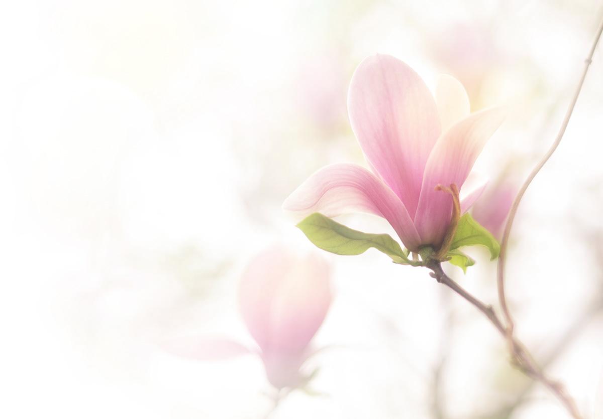 Цветы Татьяны Татаренок