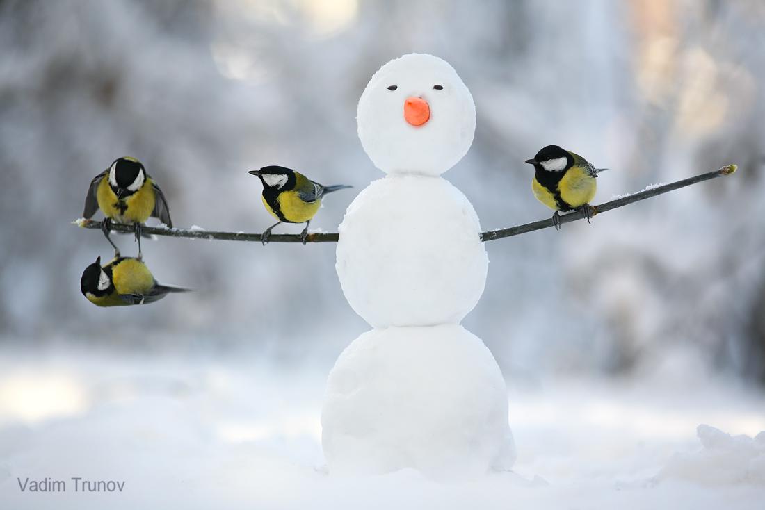 Белочки зимой / фотограф Вадим Трунов