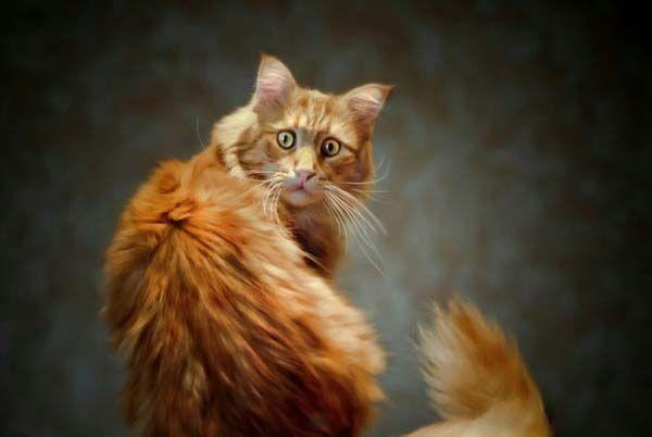 котик, кот, кошка