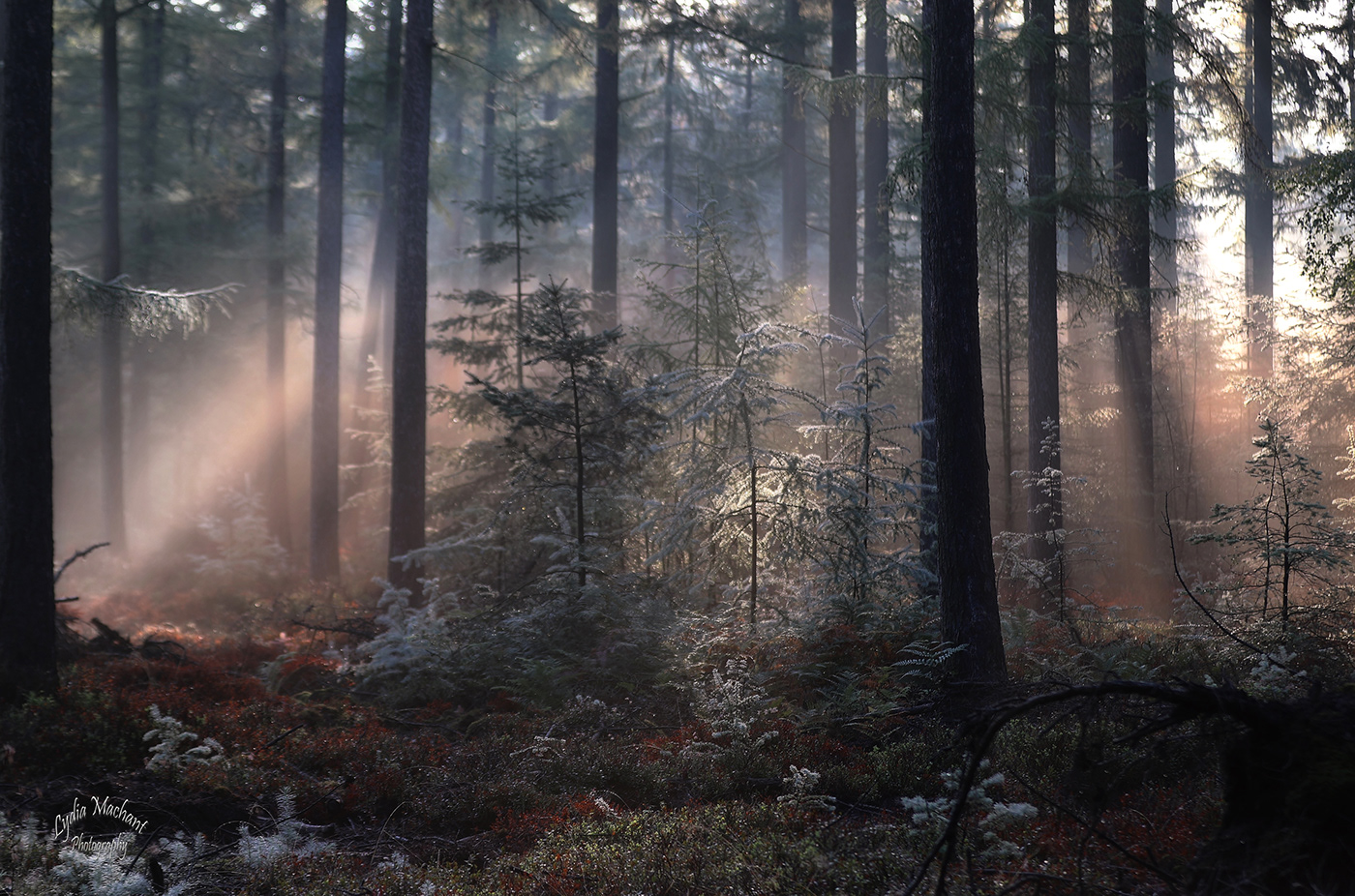 Wildf lowers - Forest | фотограф Lydia Machant