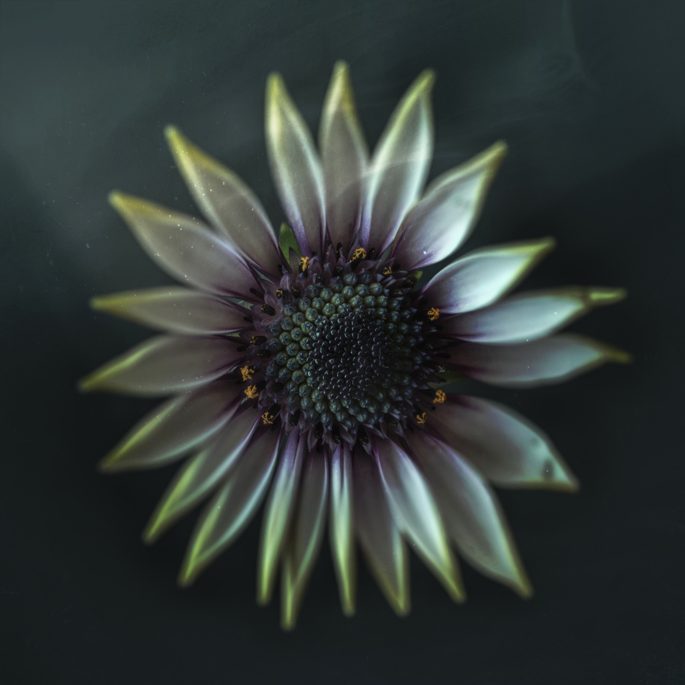 Flower Poetry / фото Bettina Güber