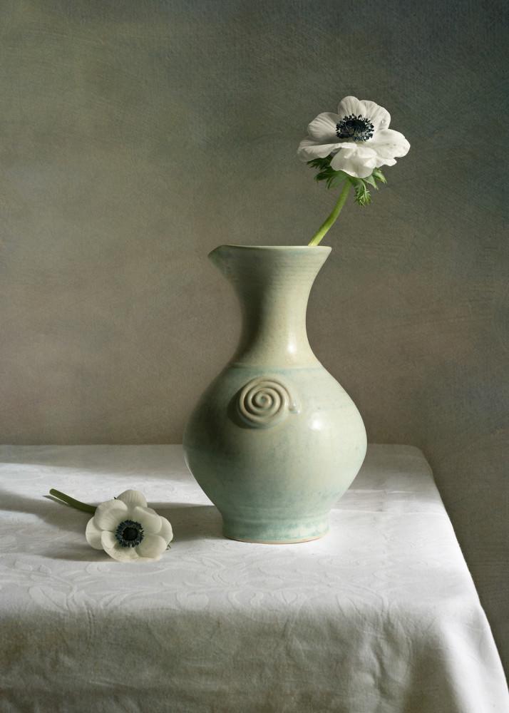 Цветы / фотограф Sharon Williams