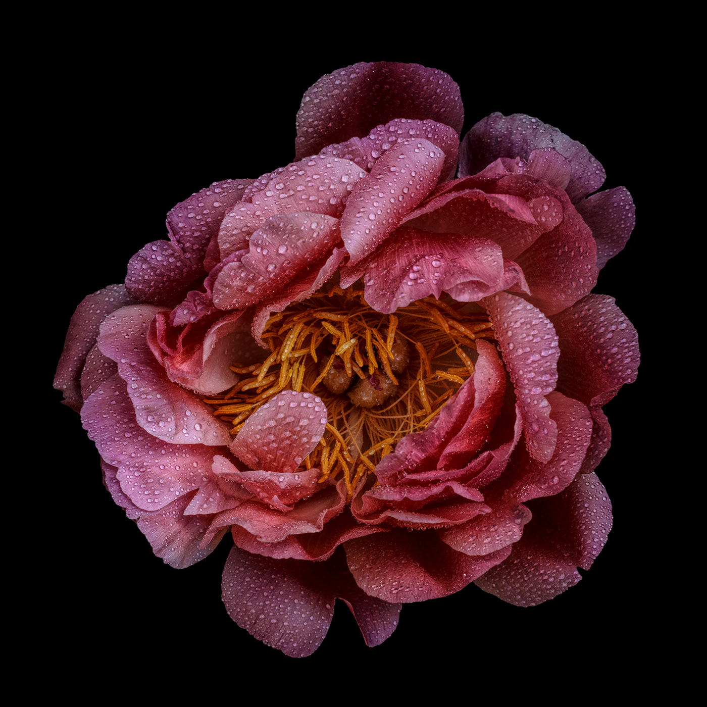 Spring Flowers / фотограф Bettina Güber
