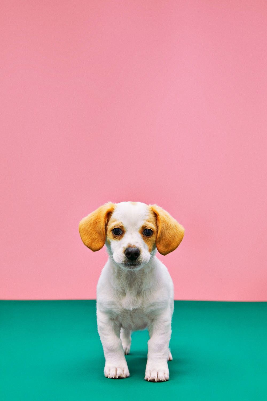 Shelter Pet Campaign