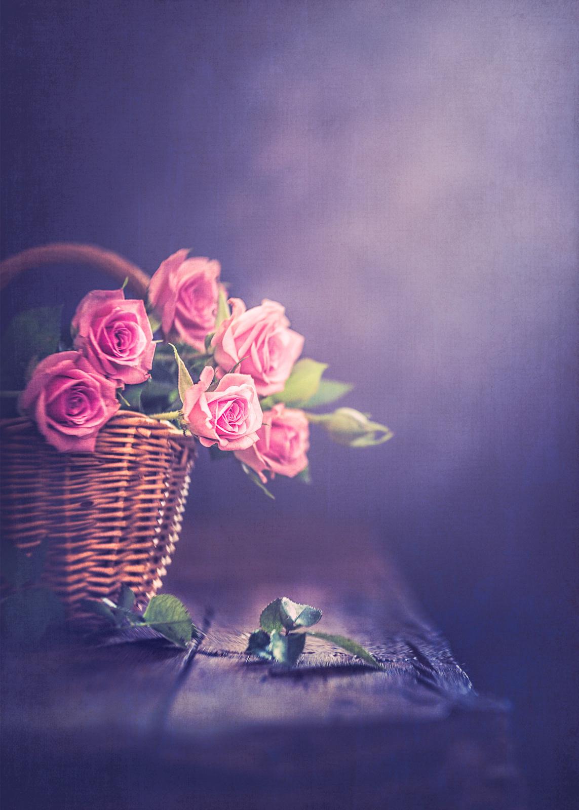 Pink roses / фотограф Rosana Zanetti Fait