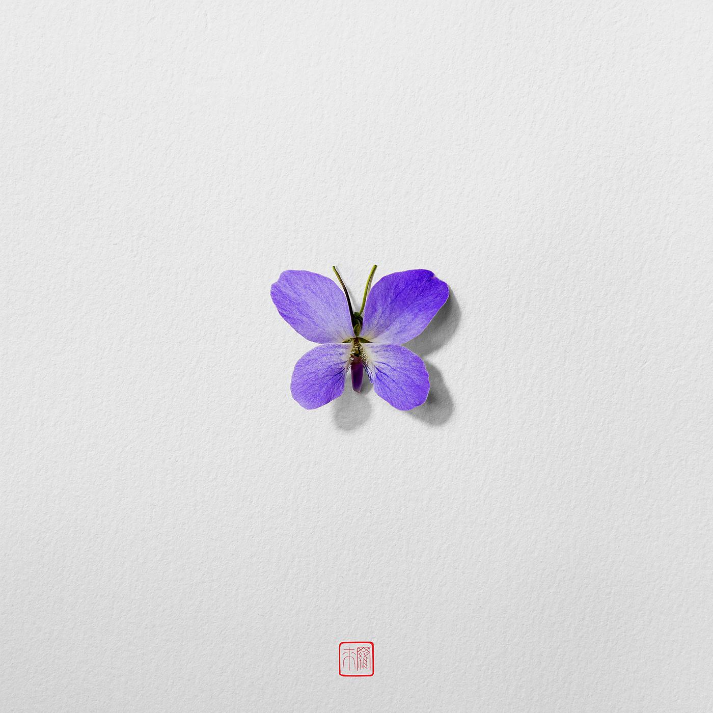 Seven Butterflies / автор Raku Inoue