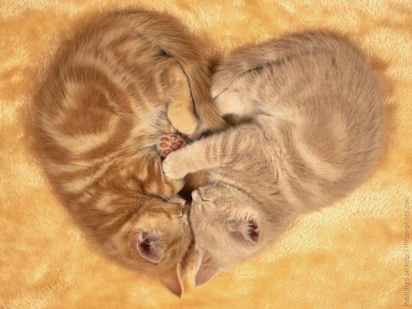 сердце, котики