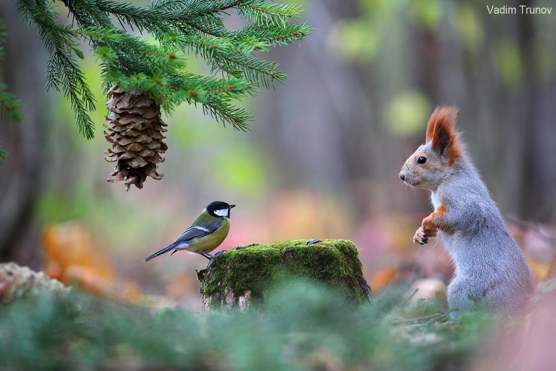 В лесу под ёлкой / фотограф Вадим Трунов