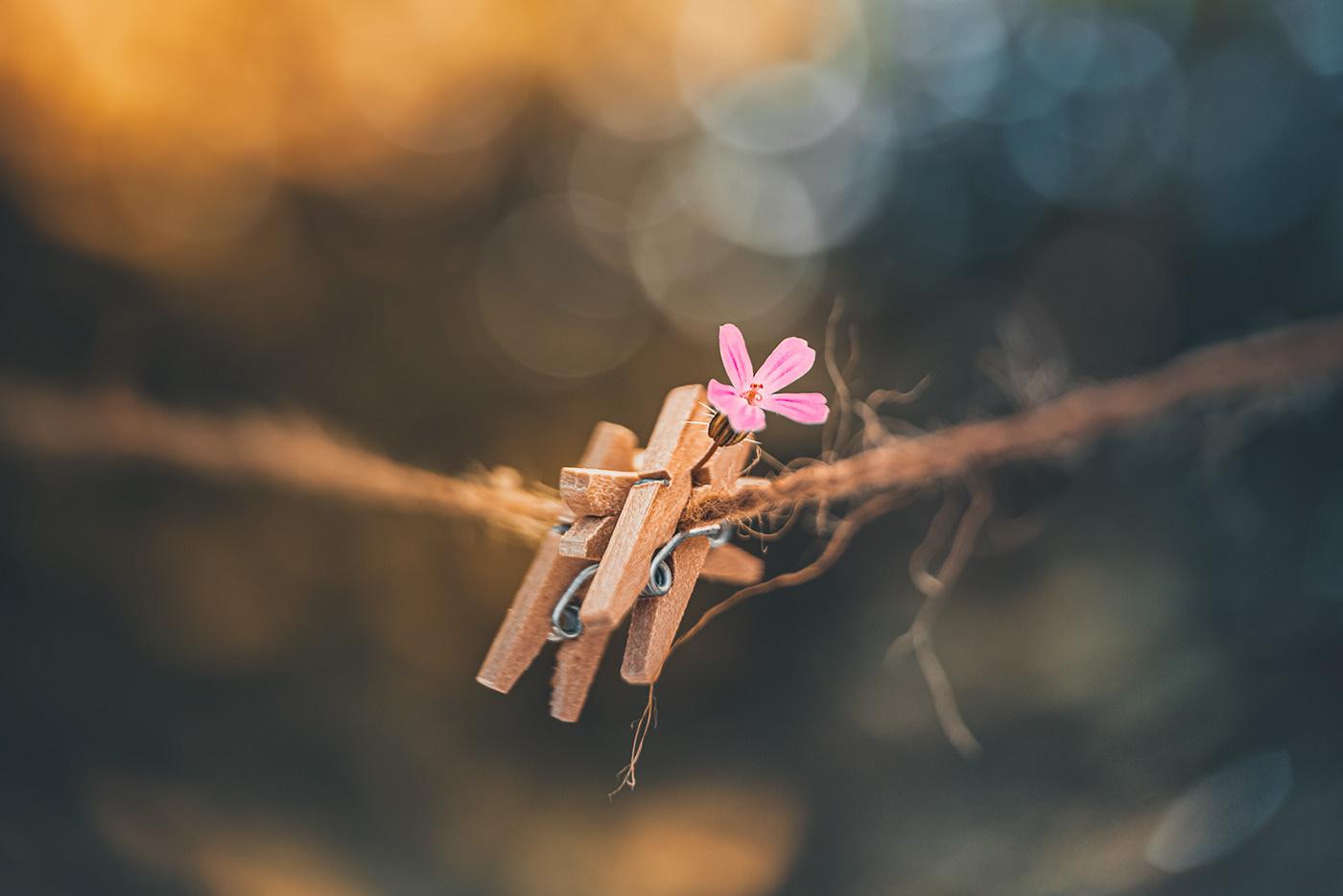 Playing in the garden / фото Rosana Zanetti Fait
