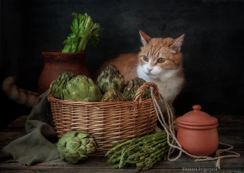 Крысиные истории / фото Eleonora Grigorjeva