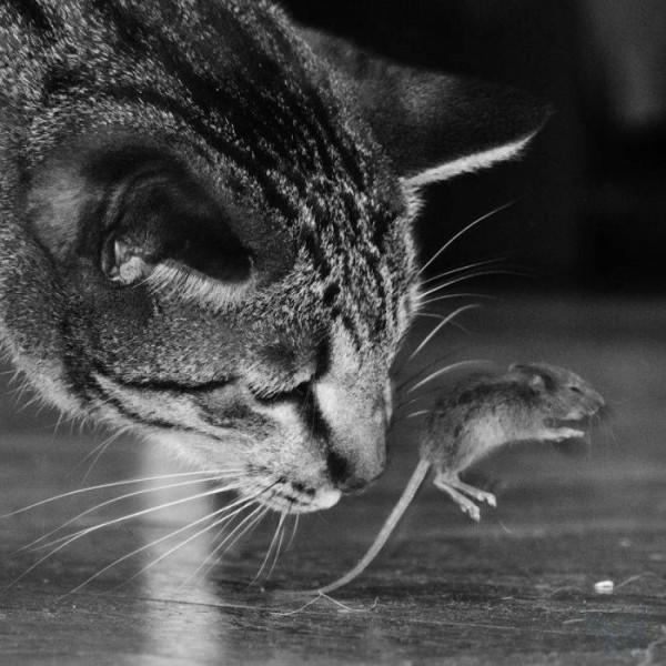 cat_01