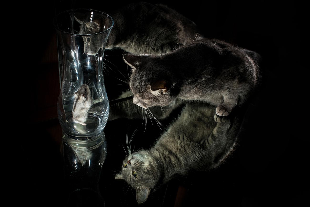 Про джунгарика и кошку / фотограф Марк Орлов