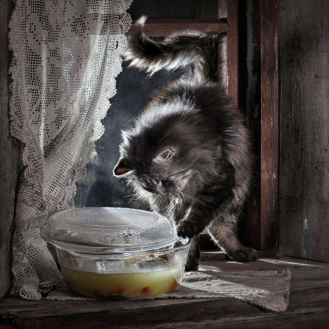 суп_с_котом