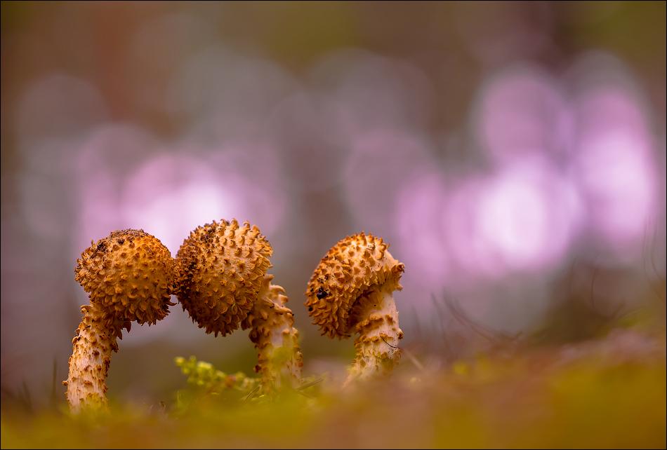 Грибы / фотограф Бурлов Андрей
