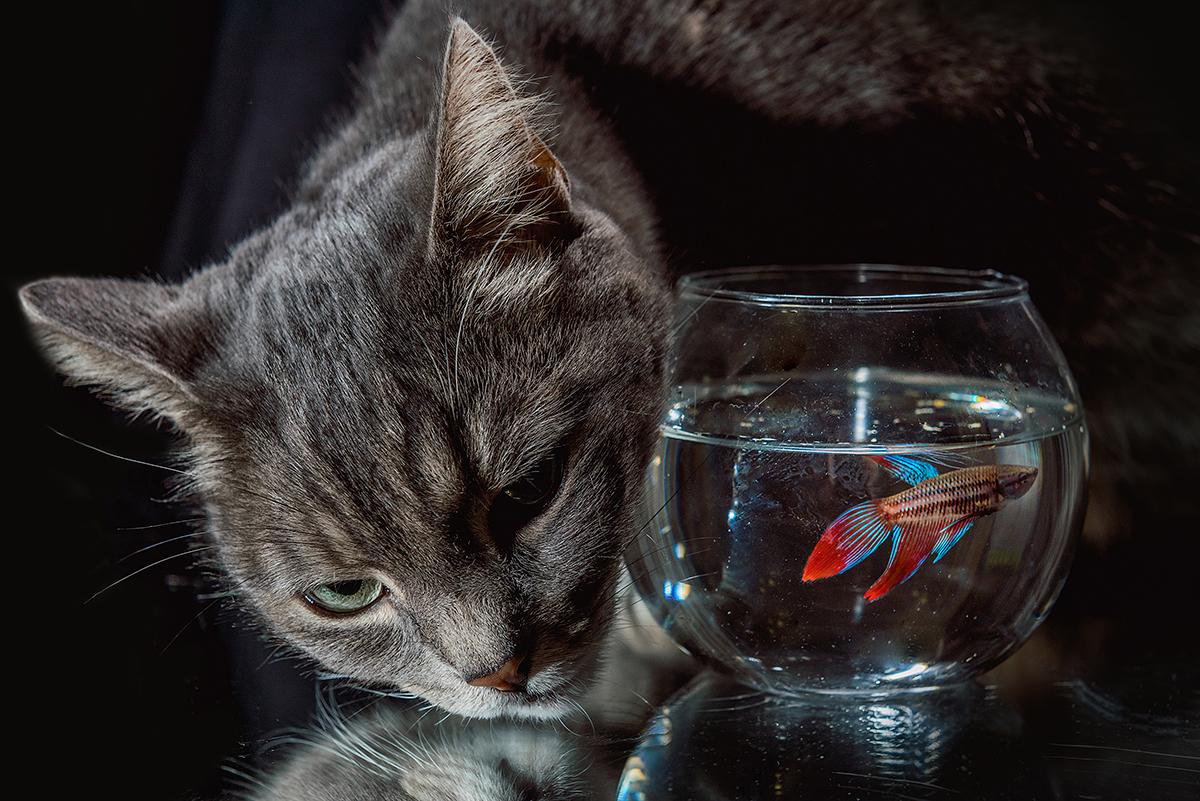 Про кошку и рыбку / фотограф Марк Орлов