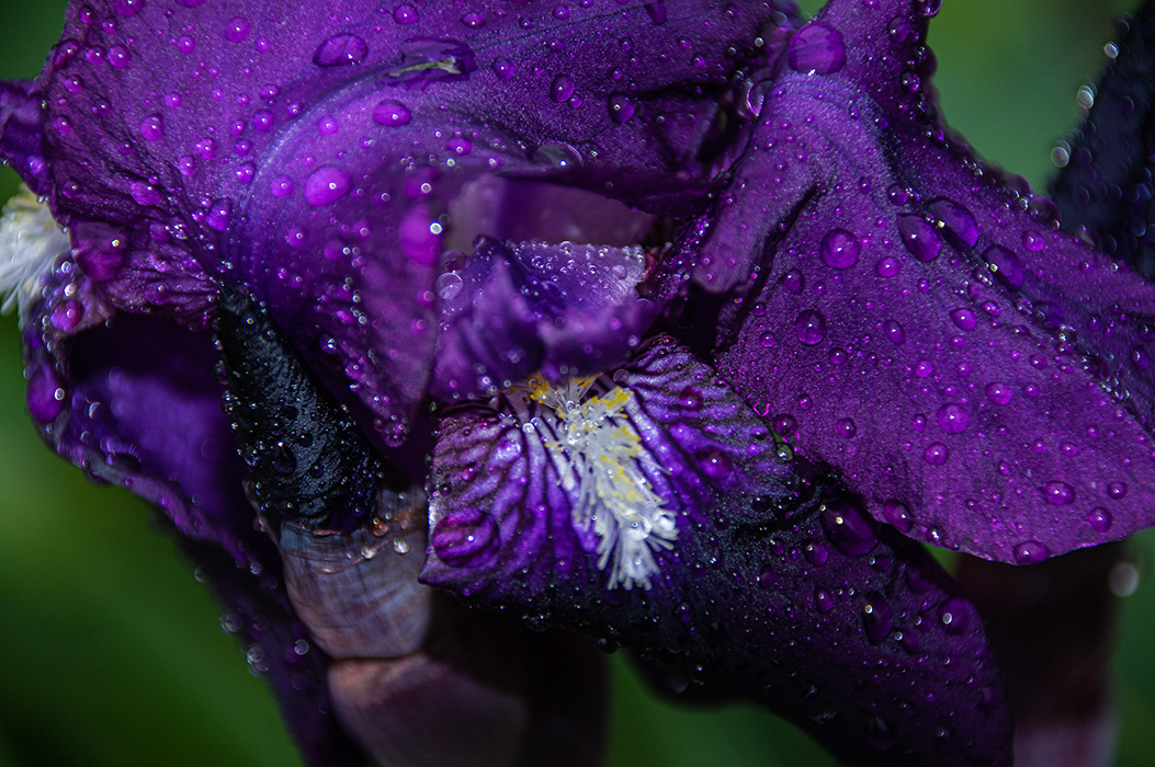 Flowers in the rain / фотограф Peter Murrowood