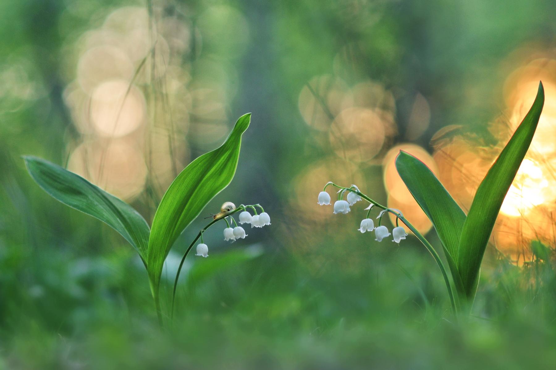 Прикосновение к прекрасному / фотограф Александр Гвоздь