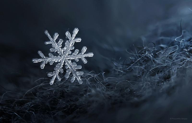 зима Полюшко Сергей