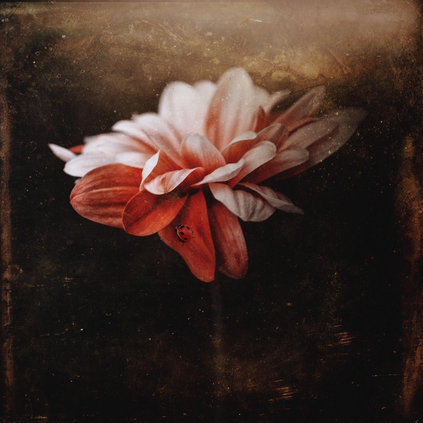 Dark Flowers / фото Bettina Güber