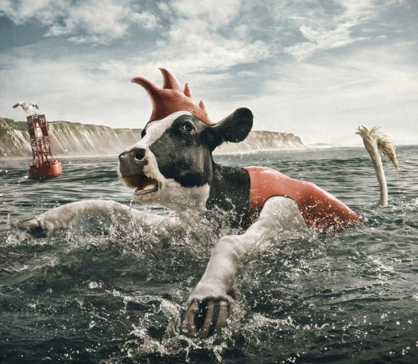 cows-6