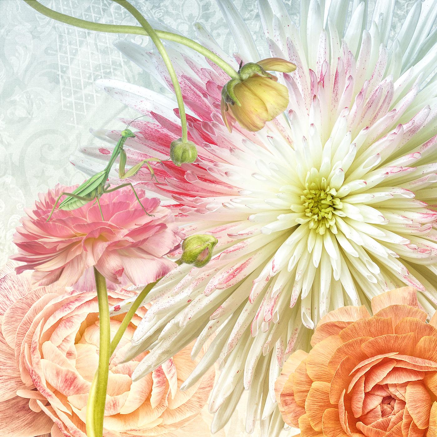 Flower Poetry/ фотограф Bettina Güber
