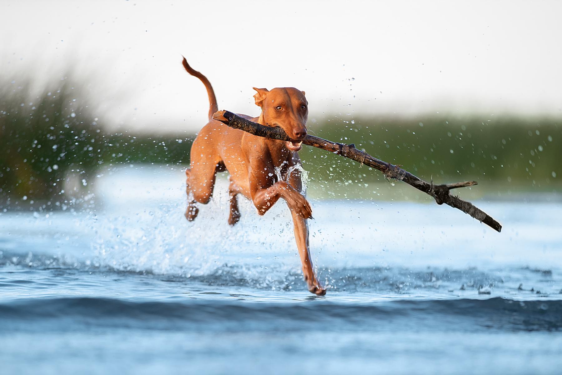 собаки / фотограф Светлана Писарева